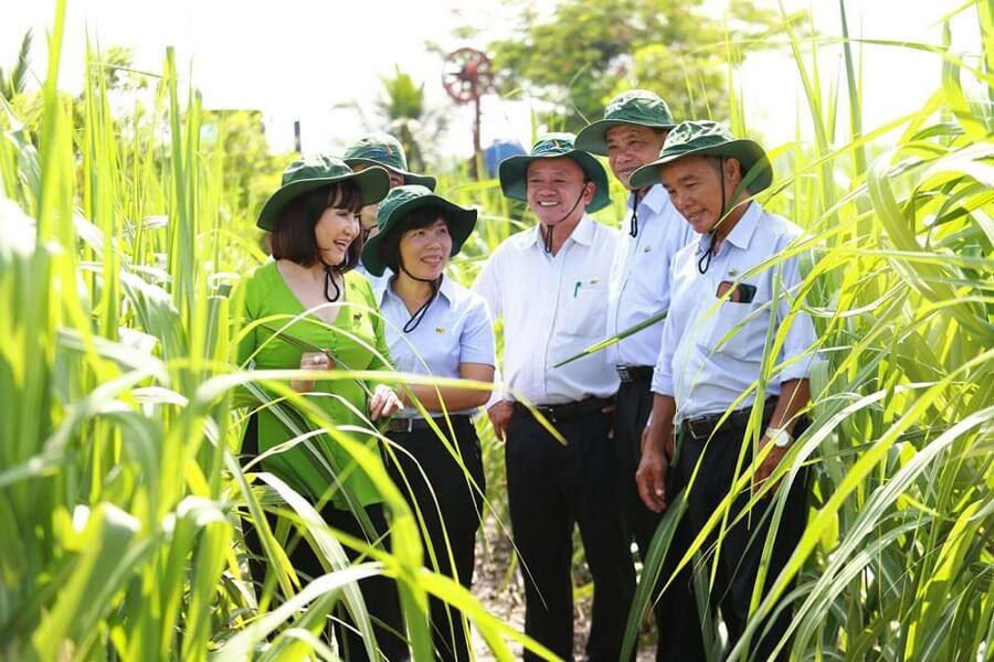 Bà Huỳnh Bích Ngọc cùng các chuyên gia TTC Group thăm vườn mía nguyên liệu